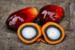 Насыпные свечи AGNI - экологически чистый растительный продукт. Agniland — поставщик свечей.